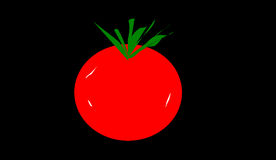 Tomaten royaltyfri foto