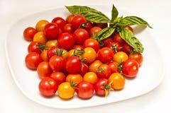 Tomaten Royalty-vrije Stock Foto's
