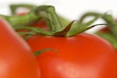 Tomaten Royalty-vrije Stock Afbeelding