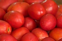Tomaten Stockbilder