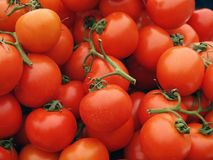 tomaten Royalty-vrije Stock Fotografie
