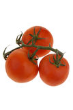 Tomaten Stockfotografie