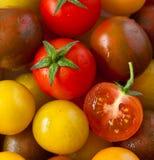 Tomaten. lizenzfreie stockfotos