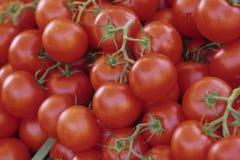 Tomaten Lizenzfreies Stockbild