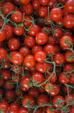 Tomaten stockfotos