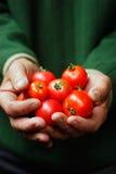Tomaten Royalty-vrije Stock Afbeeldingen