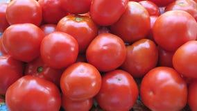 Tomaten Lizenzfreie Stockbilder