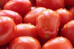 Tomaten als Hintergrund Lizenzfreie Stockfotografie