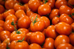 Tomaten auf Anzeige Stockfotos
