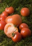 Tomaten auf dem Moos Lizenzfreie Stockbilder