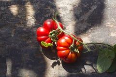 Tomaten auf dem Tisch Stockbilder