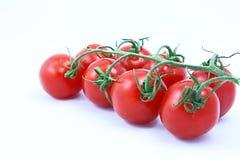Tomaten auf der Rebe Stockfotografie