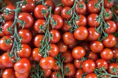 Tomaten auf der Rebe Lizenzfreie Stockfotos