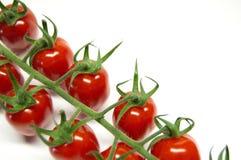 Tomaten auf der Rebe auf einem weißen Hintergrund Stockfotos