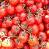 Tomaten auf der Rebe helles und appetitanregendes Gemüse stockfotos