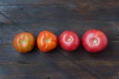Tomaten auf einem hölzernen Hintergrund Lizenzfreie Stockfotos