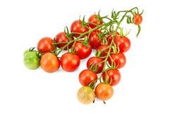 Tomaten auf einem Zweig Lizenzfreie Stockfotos