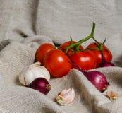Tomaten auf einer Niederlassung, einer Zwiebel und einem Knoblauch Lizenzfreies Stockfoto