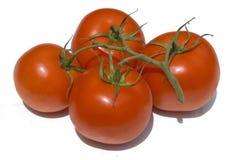Tomaten auf einer Rebe Stockfotografie