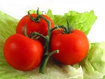 Tomaten auf Kopfsalat Lizenzfreie Stockbilder