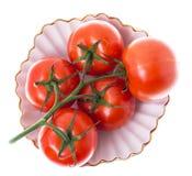 Tomaten auf Niederlassung in der Platte auf weißem Hintergrund Lizenzfreies Stockfoto