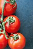 Tomaten auf Rebe Stockfoto