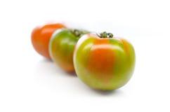 Tomaten auf Weiß Stockfotos