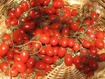 Tomaten bij de markt van de landbouwer Stock Afbeelding
