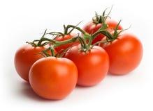 Tomaten - bos van zes, studio hoog-sleutel Stock Afbeeldingen