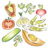Tomaten, Champignon, Gurken, Kohl, Rettiche, Kopfsalat und grüne Zwiebeln Pfeffer, Gurke, Zwiebel lizenzfreie abbildung