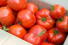 Tomaten in de doos Stock Foto's