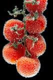 Tomaten in den Blasen lizenzfreie stockfotografie