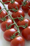 Tomaten in der natürlichen Leuchte Lizenzfreies Stockfoto