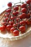 Tomaten in der natürlichen Leuchte Stockfoto