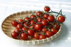 Tomaten in der natürlichen Leuchte Stockbild