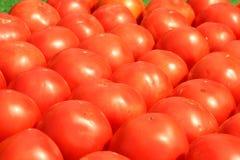 Tomaten die voor verkoop worden opgesteld Stock Afbeeldingen
