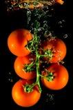 Tomaten die in water vallen Royalty-vrije Stock Foto