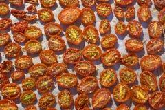 Tomaten droog in de oven Stock Foto