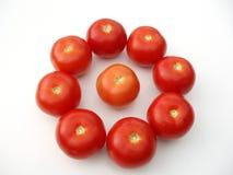 Tomaten in een cirkel Royalty-vrije Stock Afbeeldingen
