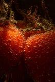 Tomaten in een glas Royalty-vrije Stock Afbeelding