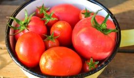 Tomaten in een tinkom Royalty-vrije Stock Fotografie
