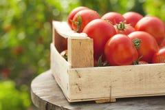 Tomaten in einem Kasten stockfoto