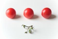 Tomaten in einer Reihe lizenzfreies stockfoto
