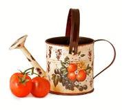 Tomaten en een het water geven pot Royalty-vrije Stock Afbeelding
