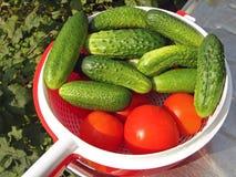 Tomaten en komkommers Royalty-vrije Stock Foto's