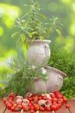 Tomaten en kruiden in amfora Royalty-vrije Stock Fotografie