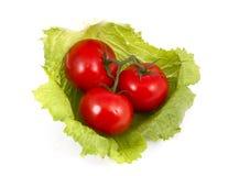 Tomaten en sla. Royalty-vrije Stock Foto
