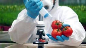 Tomaten erhalten mit Chemikalien durch einen Wissenschaftler gepumpt stock video