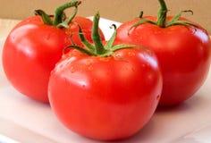 Tomaten frisch Lizenzfreie Stockfotos