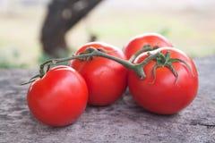 Tomaten, gekocht mit Kräutern für die Bewahrung auf Holztisch Stockbild